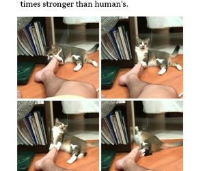 cats, smell, and funny image