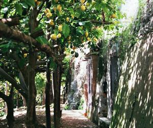 capri, garden, and lemon image