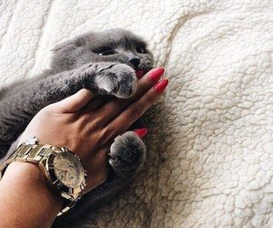 cat, nails, and cute image