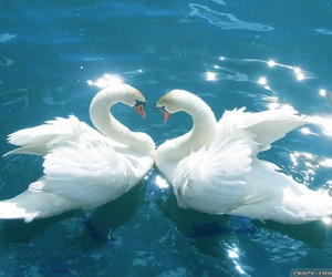 birds, coeur, and love image