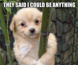 dog, cute, and panda image