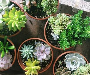 plants, green, and cactus image