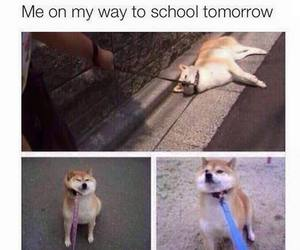 funny, school, and dog image