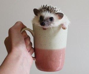 cute, animal, and beautiful image