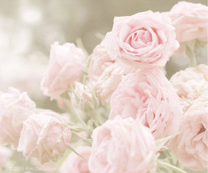 floral, flowers, and rose image