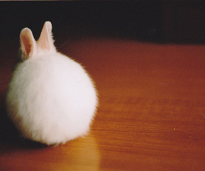 aww, rabbit, and cute image