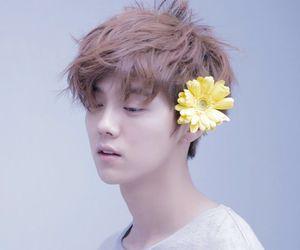 exo, lu, and flower boy image