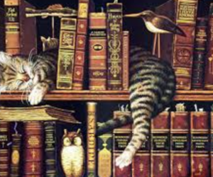 book, cat, and library image