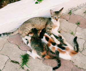 cats, cuties, and vscocam image