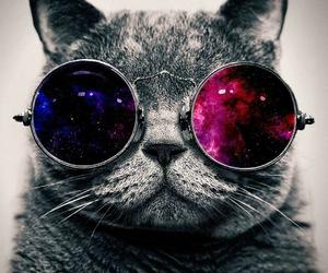 cat, kedi, and komik image
