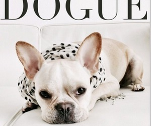 dog, vogue, and cute image