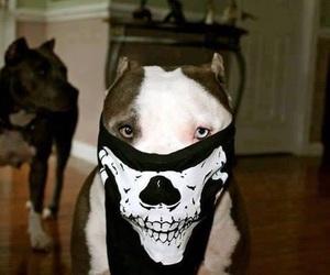 dog, pitbull, and skull image
