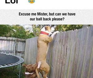 dog, funny, and lol image