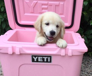 dog, pink, and cute image