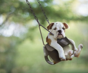 dog, cute, and swing image