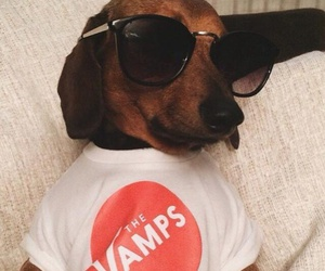 cool, dog, and the vamps image