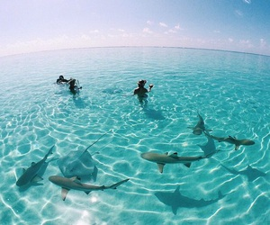 summer, shark, and ocean image