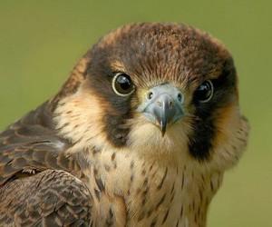 beige, bird, and brown image