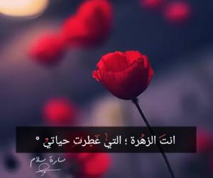 رومانسية, عطر, and زهرة image