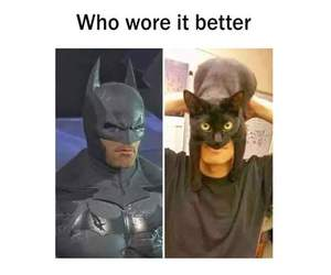 batman, batcat, and cat image