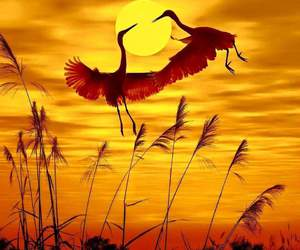 beautiful, cranes, and dreamy image