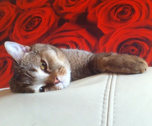 cat, kawaii, and red rose image