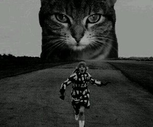 run, black and white, and cat image