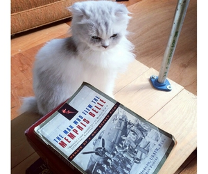 animal, book, and cute cat image