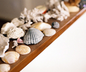 shell, photography, and vintage image