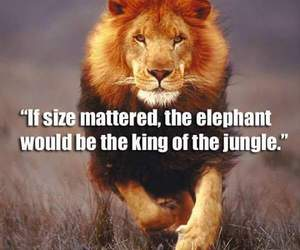 lion, king, and quote image