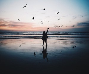 birds, free, and freedom image