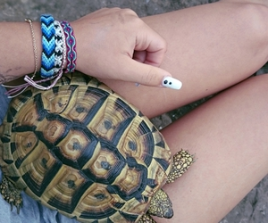 animal, indie, and turtle image
