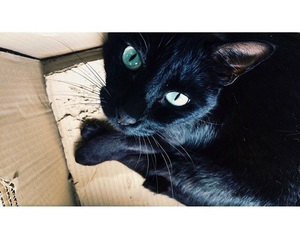 kitten and pet image