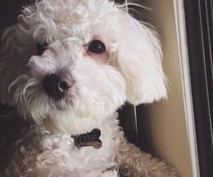 cachorro, dog, and fluffy image