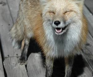 awww, foxes, and house image
