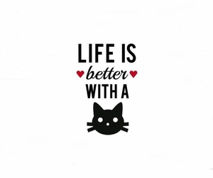 background, cat, and quotes image