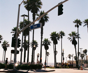 summer, california, and palm trees image