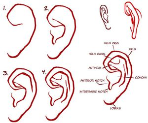 drawing tips, drawing how to, and how to draw an ear image