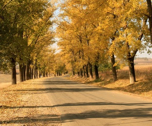 autumn, beautiful, and city image