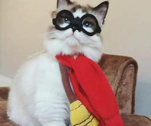 cat, cute, and harry potter image