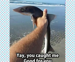 fishing, meme, and shark image
