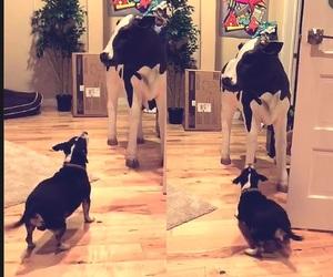 cow, dog, and wishbone image