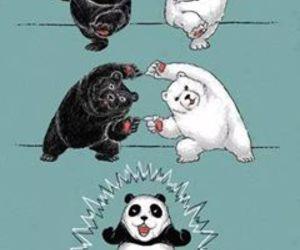 panda, bear, and fusion image