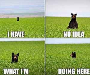 bear, funny, and lol image