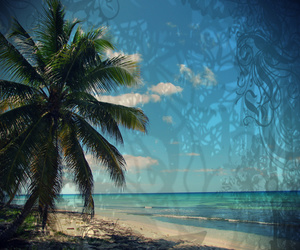 Caribbean, Dominican Republic, and palm tree image