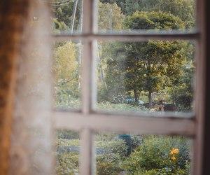 arboles, flowers, and ventana image