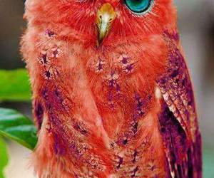owl, animal, and red image