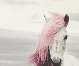 horse, pink, and animal image