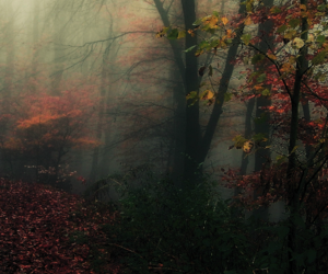 autumn, forest, and brown image