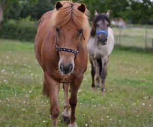 animal, blog, and equine image